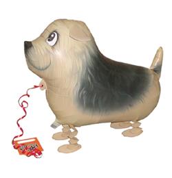 Sétáló Terrier Lufi